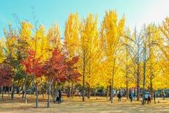 娜米海岛,韩国- 10月25 :拍照片的游人 库存图片