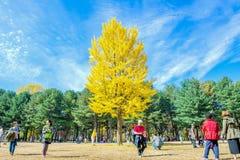 娜米海岛,韩国- 10月25 :拍照片的游人 免版税库存照片