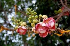 婆罗双树花& Bokeh 库存照片