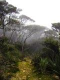 婆罗洲云彩森林kinabalu挂接 免版税库存图片
