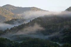 婆罗洲原始森林 库存图片