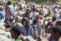 婆罗门公牛、封牛和其他牛一致最大的家畜市场在非洲国家垫铁  Babile 埃塞俄比亚 库存照片