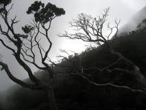 婆罗洲云彩森林kinabalu挂接 图库摄影