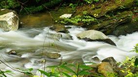 婆罗洲雨林小河秋天 库存照片