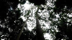 婆罗洲雨林 图库摄影