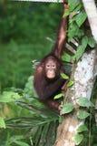婆罗洲 库存照片
