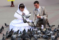 婚姻夫妇提供的鸽子 免版税库存照片