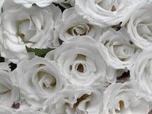 婚姻白色的纯玫瑰 库存照片