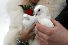 婚姻白色的鸽子 免版税库存图片