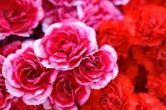 婚姻的场面的美好的花背景 免版税库存图片