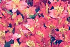 婚姻的场面葡萄酒口气的美好的花背景 免版税库存照片