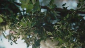 婚姻的弧用花/装饰的地方装饰婚礼的 股票视频