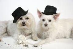 婚姻的狗 免版税库存照片