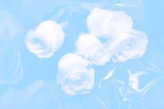 婚姻的玫瑰 免版税图库摄影