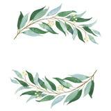 婚姻的绿色枝杈 额嘴装饰飞行例证图象其纸部分燕子水彩 免版税图库摄影