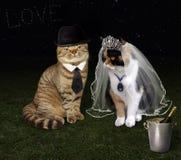 婚姻1的猫 免版税库存图片