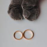 婚戒和猫 免版税库存照片