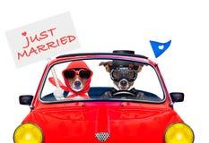 结婚的狗 库存照片