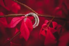 婚礼在欢乐秋天装饰的定婚戒指 库存照片