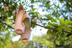 婚礼在苹果树分支的新娘鞋子 结婚宴会概念 免版税图库摄影