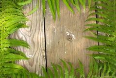 婚礼大模型从上面 美好的花卉蕨样式 平的位置样式 免版税库存图片