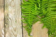 婚礼大模型从上面 美好的花卉蕨样式 平的位置样式 免版税库存照片