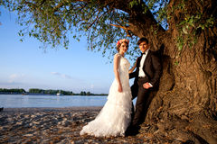 婚礼夫妇愉快在树下对河岸 库存图片