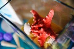 婚礼海和海洋装饰海星 图库摄影