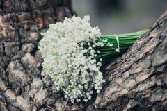 婚礼照片 库存照片