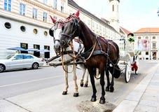 婚姻的用马拉的支架在维也纳,奥地利 免版税库存照片