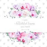 婚姻的花卉传染媒介设计水平的卡片 桃红色和白色牡丹,紫色兰花,八仙花属,紫罗兰色风轮草开花框架 免版税库存图片