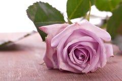 婚姻的紫色玫瑰 库存照片