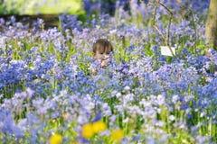 婴孩会开蓝色钟形花的草采摘 库存照片