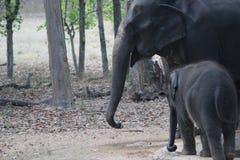 婴孩和母亲大象 免版税图库摄影