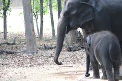 婴孩和母亲大象 库存图片