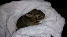 婴孩在特里毯子包裹的棉尾巴兔子 免版税图库摄影