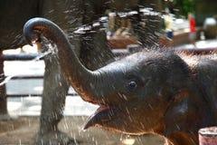婴孩大象享用水 免版税库存照片
