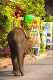 婴孩大象女孩骑马年轻人 免版税库存照片