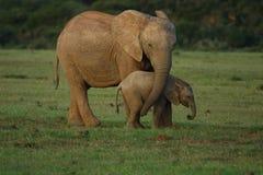 婴孩大象母亲 库存照片