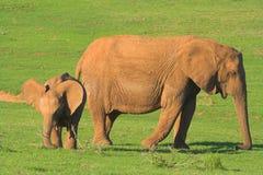婴孩大象母亲 免版税库存图片