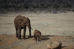 婴孩大象父项 库存照片