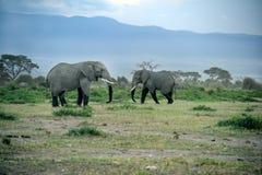 婴孩大象编组他们的大草原 免版税库存图片
