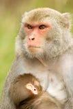 婴孩她的母亲 图库摄影