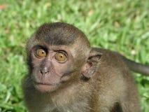 婴孩好奇猴子凝视 免版税库存照片