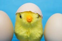 婴孩小鸡和破裂的鸡蛋在他的头 免版税图库摄影