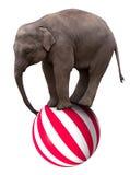 婴孩平衡的球马戏大象 免版税库存图片