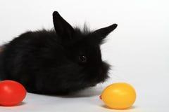 婴孩怂恿兔子玩具 免版税库存图片