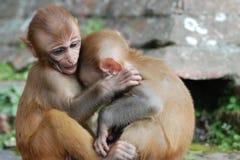 婴孩拥抱猴子 库存照片