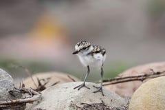 婴孩海滩鸟年轻人 免版税库存图片