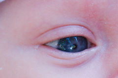 婴孩眼睛 库存图片